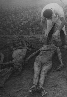 Camp Lepoglava ( NDH ) , extraction of teeth indi- cations , WW2 Yugoslavia