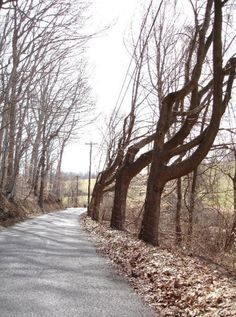 Don't Drive On These 6 Haunted Streets In Pennsylvania...Or You'll Regret It || 3. Cossart Road in Chadds Ford Township