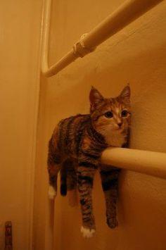 Cat storage..haha