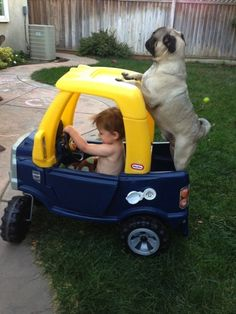 If Tripp had a pug. He has this same truck.. haha