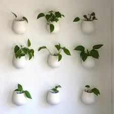 Image result for plants in the kitchen