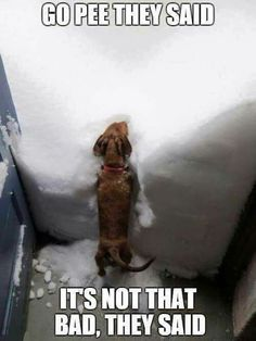 Dogs.... https://www.sunfrog.com/Pets/Dachshund-Through-The-Snow.html?71408