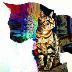 Paulo Moluap Noite de gatos