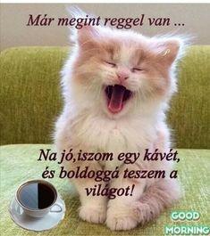 Good Day, Good Night, Good Morning, Here Kitty Kitty, Buddha, Cats, Erika, Animals, Beauty