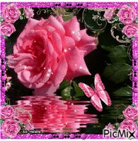 See the PicMix Pink rose. belonging to StellaStai on PicMix. Good Morning Beautiful Pictures, Rose, Creative, Flowers, Plants, Pink, Roses, Flora, Royal Icing Flowers