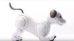 Sonys Aibo Robot Dog Learns Some New Tricks - Geekazine.com