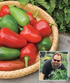 Pepper, Hot, Biker Billy Hybrid