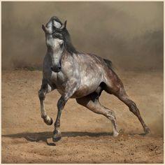 Arabian horse photo by Wojtek Kwiatkowski
