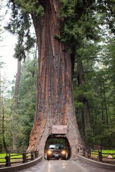 Northern California Redwoods Drive-Thru Tree (blog post with Northern California family road trip notes)