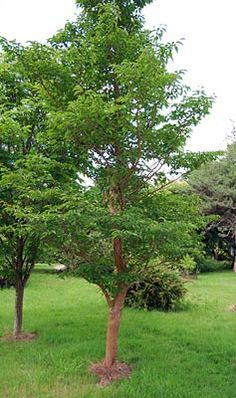 vine grove mature singles Plants in vine grove on ypcom see reviews, photos, directions, phone numbers and more for the best plants in vine grove, ky.