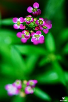 vvv Summer Flowers by Jim Crotty 8