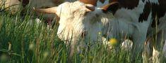 Bio-dynamic Agriculture - L'AUBIER Montezillon and Neuchatel, a little corner of paradise