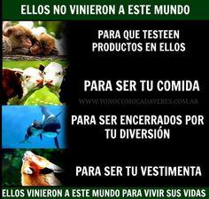 Todos los animales son seres vivos, al igual que nosotros, tienen todo el derecho del mundo a vivir y ser respetados