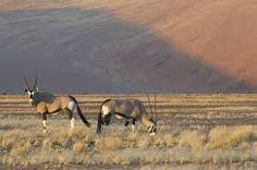 Bildergebnis für stadt in der wüste
