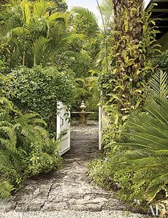 A gate framed by a sago palm and blossoming plumbago leads to a courtyard