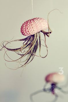 Jellyfish Air Plant // Sea Urchin Wedding Favor by PetitBeast, $24.00