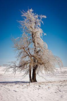 Portrait of a Tree in Winter