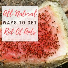 Looking for ways to get rid of ants, but don't want to use harsh chemicals? Here are 57 all-natural ways to control ants in your home and in the garden.