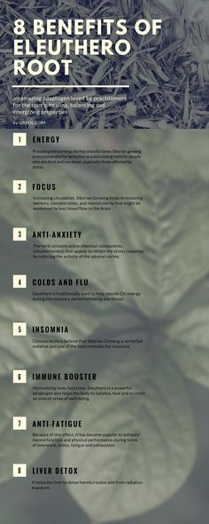 Eleuthero Root Infographic Energy Focus Anti-Anxiety Anti-Fatigue Chronic Fatigue Syndrome Common Colds Immune Booster Liver Detox Cancer Antiviral High Blood Pressure Insomnia Bronchitis