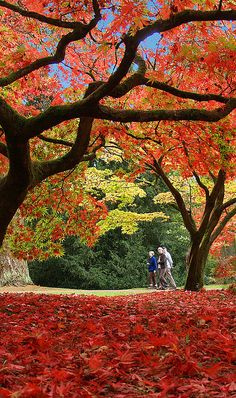 Autumn colours at Westonbirt Arboretum in Gloucestershire, England