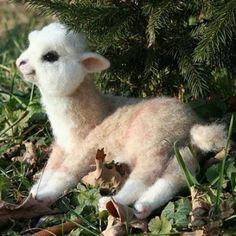 Baby alpaca!!!