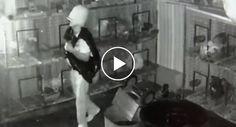Ladrão Usa Balde Na Cabeça Para Esconder o Rosto Durante Assalto