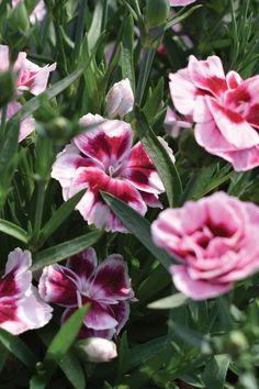 Spring Plants, Facebook Sign Up, Planting Flowers