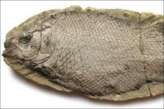 fossils - Google Search