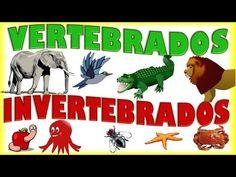 Animales Vertebrados e Invertebrados para Niños, Vertebrate & Invertebrate…