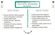 Camellia sinensis: China bush & Assam bush // Tee sitä tee tätä: NERD ALERT // Teeviljelmät // Teepensaat