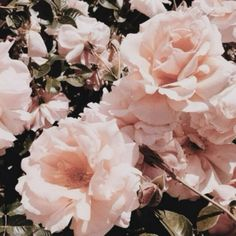 I've never been given flowers in my life, which sucks because I really like them. Flower Aesthetic, Aesthetic Images, Pink Aesthetic, Aesthetic Wallpapers, Pretty Flowers, Pretty In Pink, Aphrodite Aesthetic, Rosa Pink, Images Esthétiques