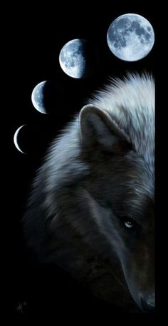 New Wolf Spirit Animal Art Full Moon Ideas Anime Wolf, Wolf Love, Beautiful Creatures, Animals Beautiful, Cute Animals, Wolf Spirit, My Spirit Animal, Wolf Stuff, Wolf Wallpaper