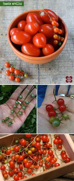 tomate-ervilha-(leticia-massula-para-cozinha-da-matilde)