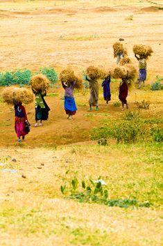 Tanzanian women carrying hay, Tanzania by Blaine Harrington III