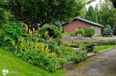Beautiful Perennial Gardens!