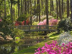 Callaway Gardens, Pine Mountain,Ga.There is nothing more beautiful than the Azalea Bowl in the spring. Just a short drive from my home. Awesome any time of the year!