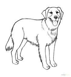 Realistic Golden Retriever Coloring Pages How To Draw A Golden Retriever 7 Steps With Pictures WikiHow