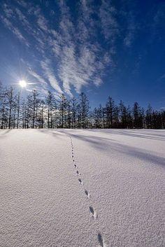 25 fotografías del invierno con fascinantes paisajes nevados | Banco de Imágenes (shared via SlingPic)