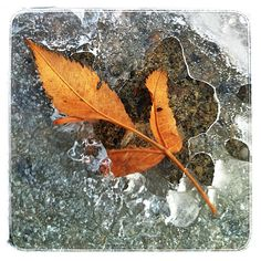 Leaf in the ice. Photo A Day, Everyday Objects, Monochrome, Ice, Texture, Winter, Photography, Black People, Surface Finish