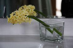 Hyacinty na jaře nezdobily jen zahradu, ale taky naši koupelnu.