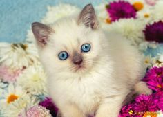 Cute pretty kitten