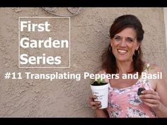 Time to transplant those pepper and basil seedlings! A quick, simple and inexpensive way to grow your seedlings larger and stronger before you plant the out in the garden! Head Start, Propagation, Spring Garden, Step By Step Instructions, Basil, Super Easy, Larger, Pizza, Gardening