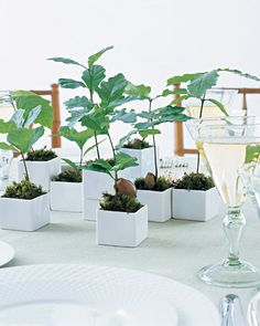 Seedling Wedding Favors