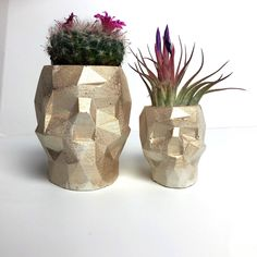 Excited to share this item from my #etsy shop: Concrete Gold geometric skull planter,plant pot,housewarming gift,cactus pot,succulent pot,desk tidy,office gift Air Plants, Potted Plants, Cactus Plants, Succulent Pots, Succulents, Sugar Skull Decor, Skull Planter, Gothic Garden, Cactus Pot