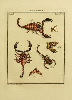 D.3,pt.2 - De natuurlyke historie der insecten; 1768 Biodiversity Heritage Library