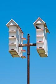 free purple martin house plan! | for the birds! | pinterest