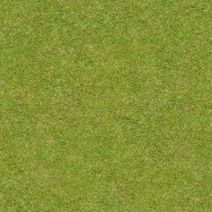 Grass Images   Free Vectors, Stock Photos & PSD