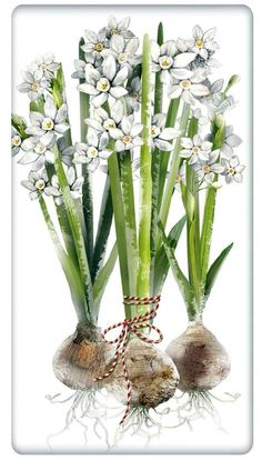 Bulbs of Paperwhites 100% Cotton Flour Sack Dish Towel Tea Towel
