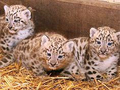 Tierkinder im Zoo - Zoo Erlebnis - Zoo Salzburg
