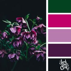 // 25 Floral Color Palettes. Beautiful color combinations! Check out these 25 color palettes inspired by flowers, gardens and nature at www.sarahrenaeclark.com #colorpalette #colorscheme #colorcombo Purple Color Combinations, Paint Color Combos, Purple Color Palettes, Spring Color Palette, Colour Pallette, Beautiful Color Combinations, Color Schemes, Colorful Garden, Colorful Flowers